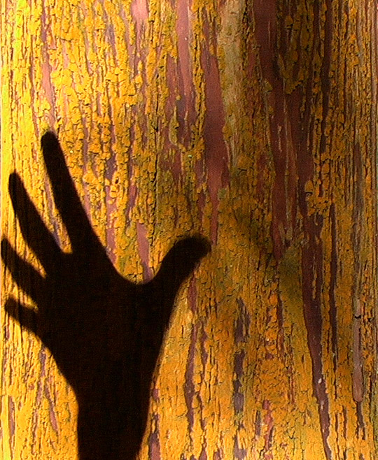 Schatten einer Hand auf der Baumrinde